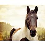 Thumbnail paard 1
