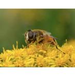 Thumbnail bijvriendelijke tuinen  hoveniers en tuinontwerpers  2018 06 01 12 22 27