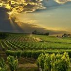 Square wijn