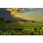 Thumbnail wijn