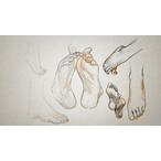 Thumbnail drawing lower body 240 v1